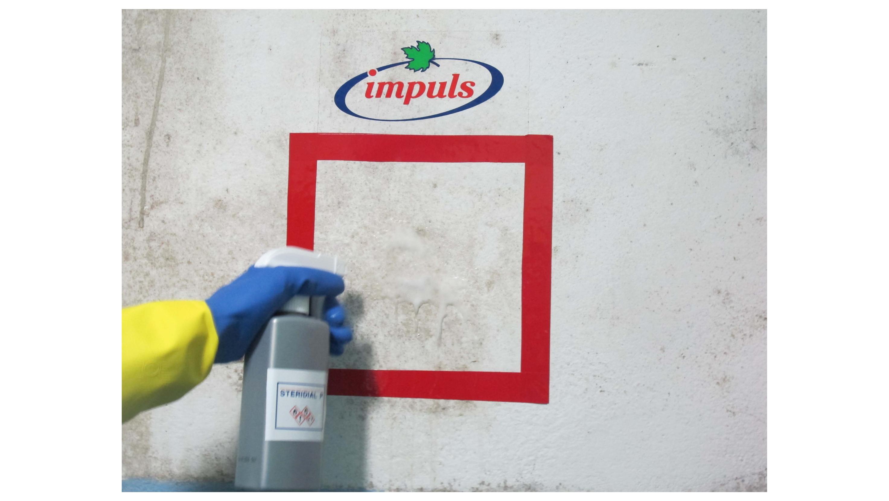 Jak usunąć grzyby i pleśnie ze ściany lub sufitu?
